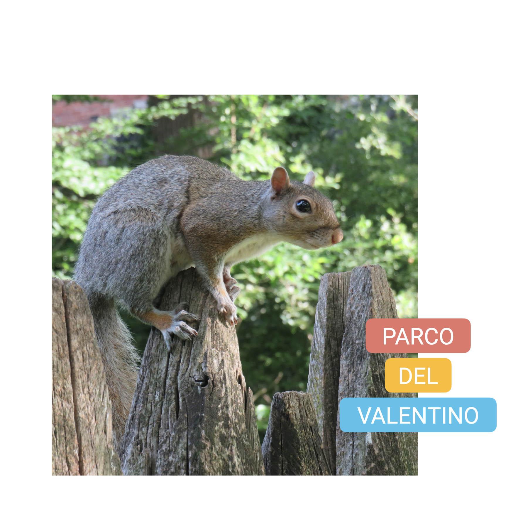 visit turin parco valentino bike tour torino squirrels